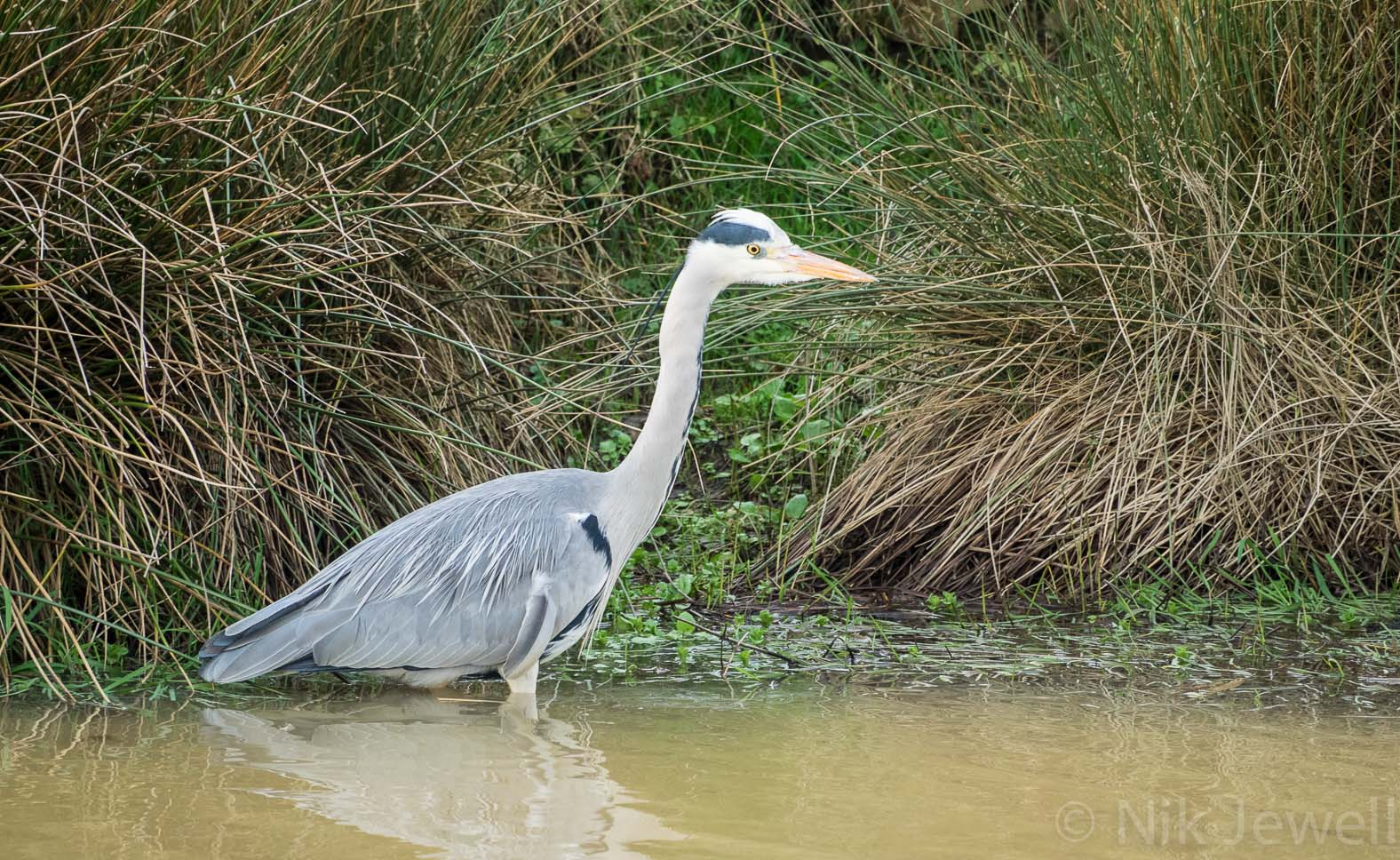 Before-Heron, Bude Canal