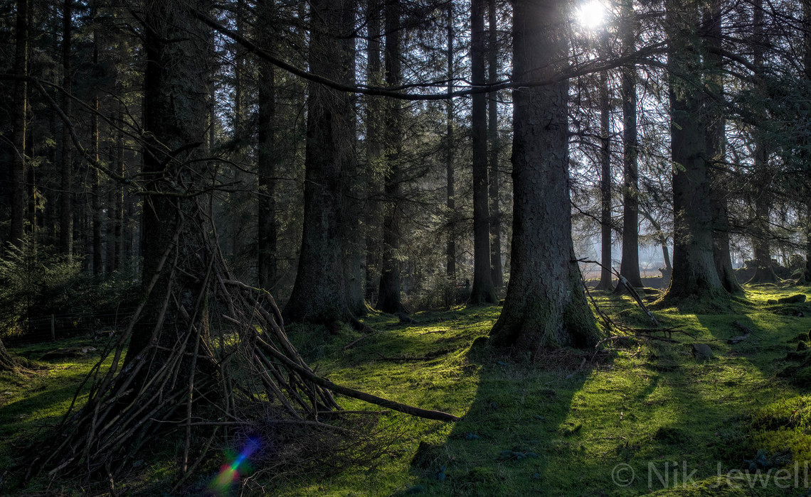 Attractive lens flare in a high dynamic range shot of sun through pine trees in Bellever Forest on Dartmoor