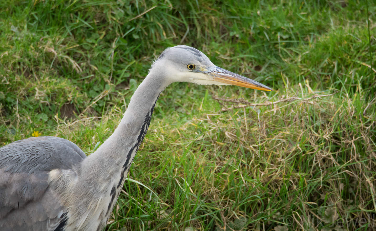 Before-Heron, Bude Marshes