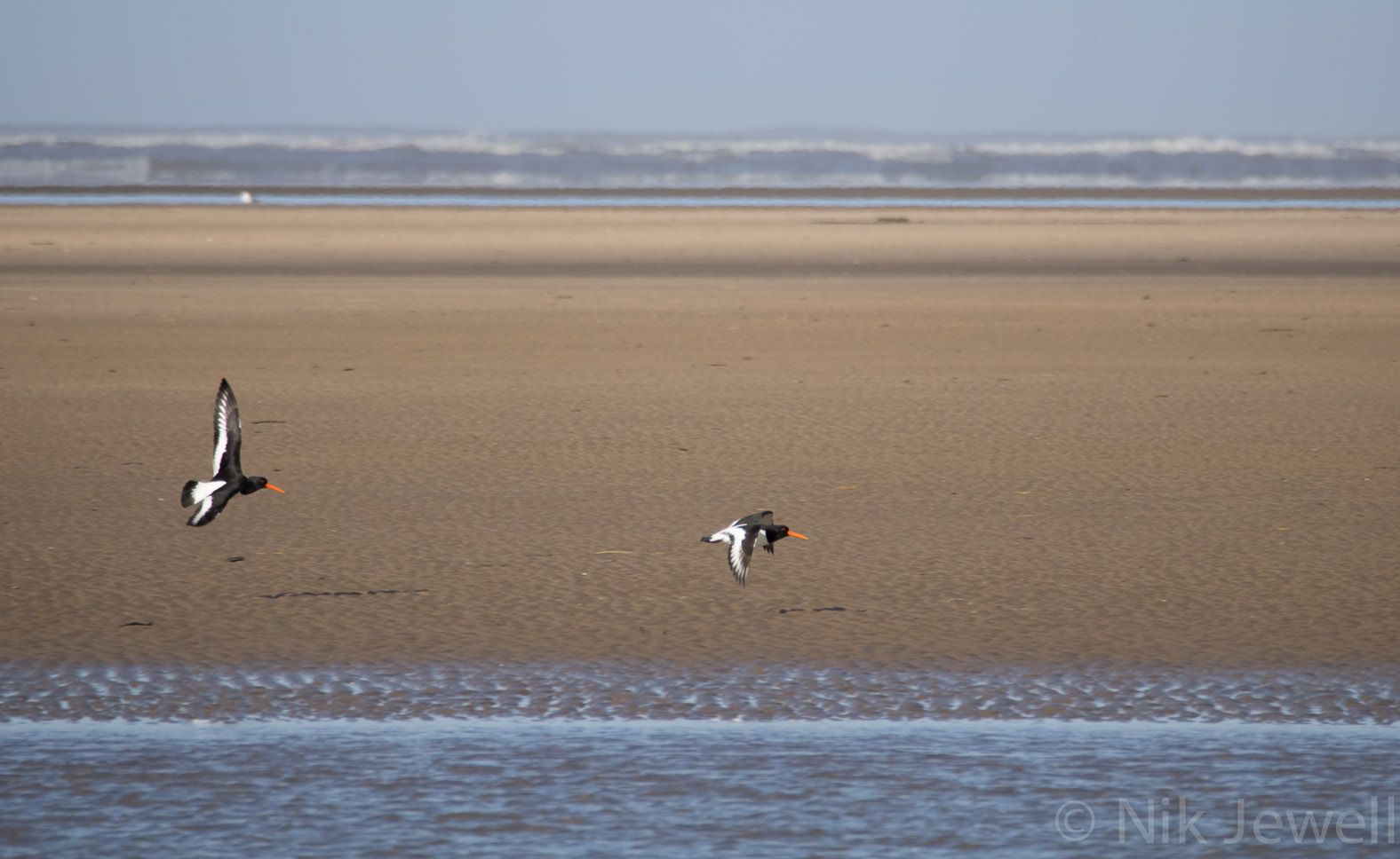 Before-Oystercatchers, Westward Ho!