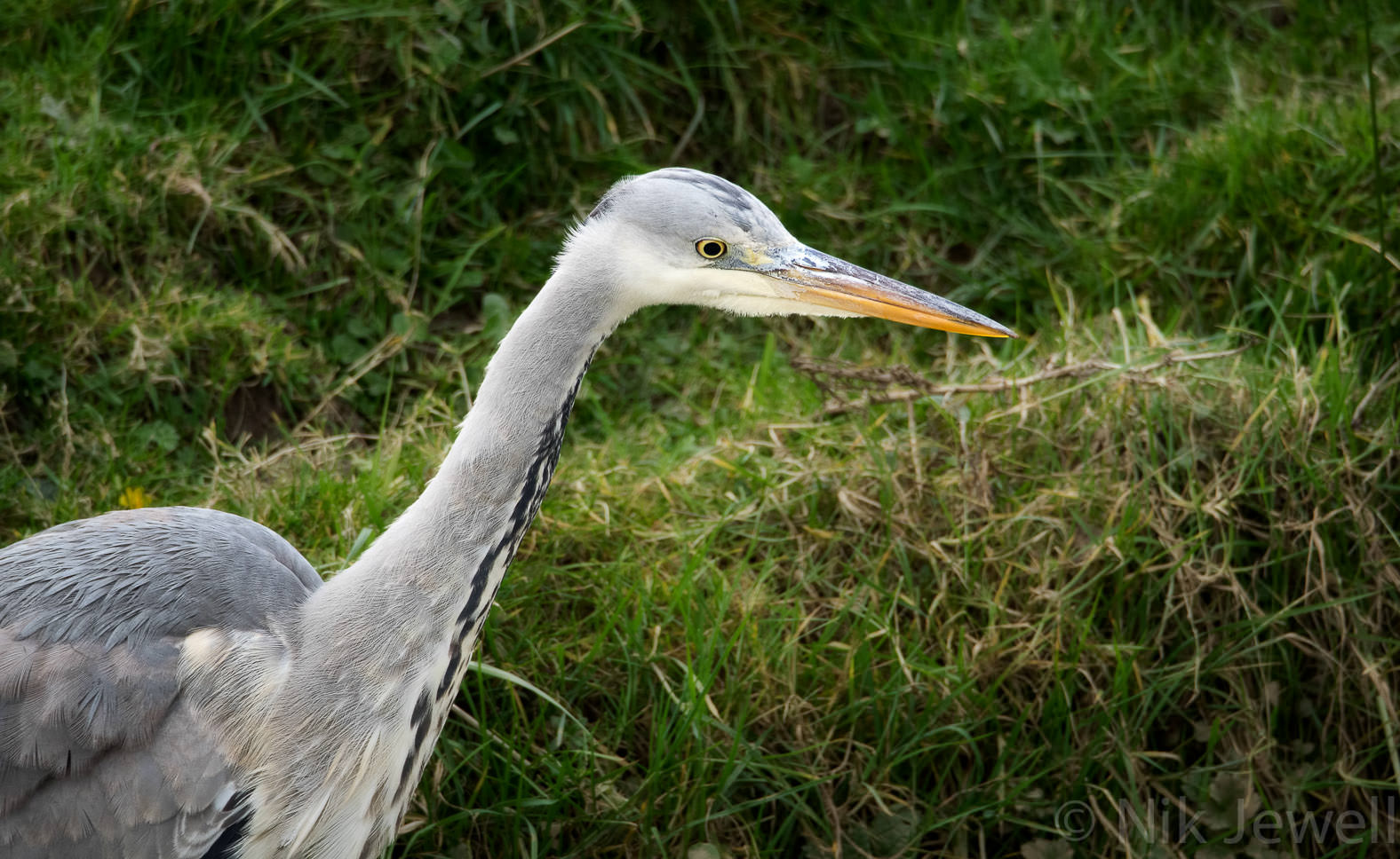 After-Heron, Bude Marshes
