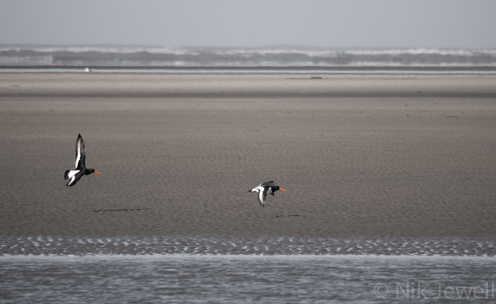 After-Oystercatchers, Westward Ho!